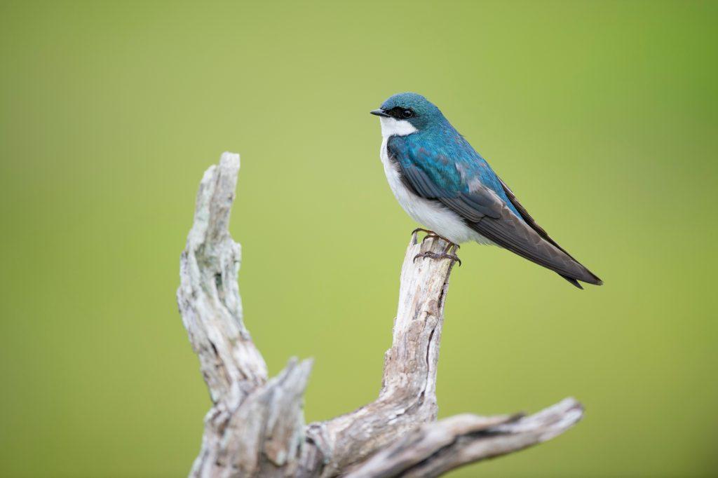 Ein blauer Vogel sitzt auf einem Ast.
