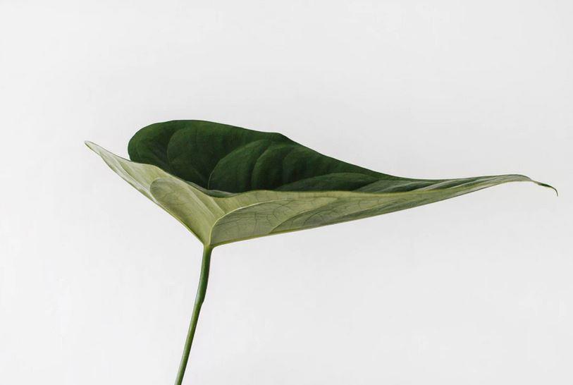 ein einzelnes grünes blatt